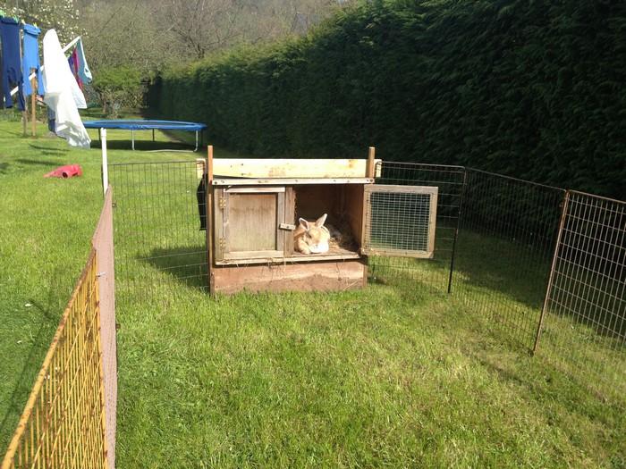 fireguard repurposed into rabbit run