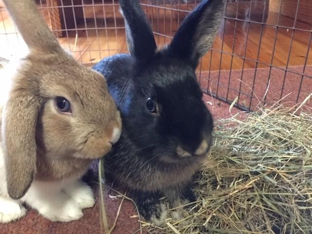 rabbits indoors